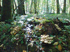 Plein d'autres jolis champignons