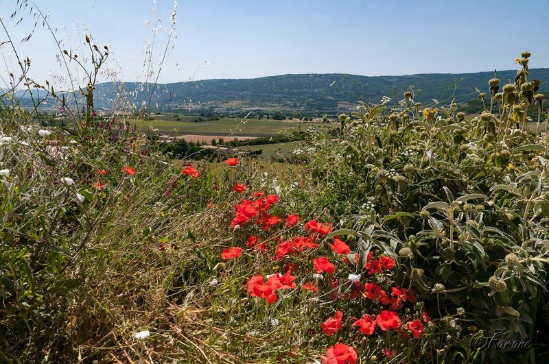 Vue du village de Sault Vaucluse-2