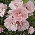 fleurs-roses-2 (30)