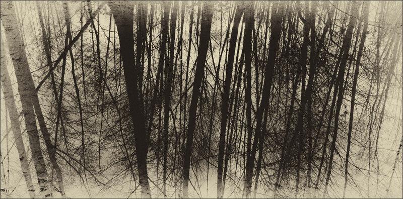 Galuchet arbres efex 281218