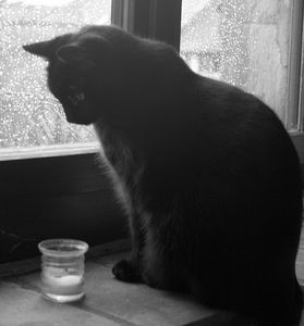 Chat_Baudelaire