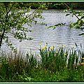 Lac Mimizan 0505155