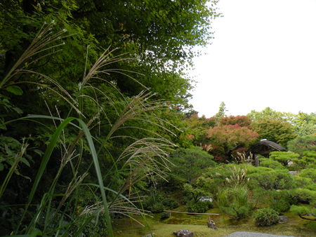Japon_Kyoto_2009_2107