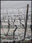 Vignes_Alsace_decembre_2007_