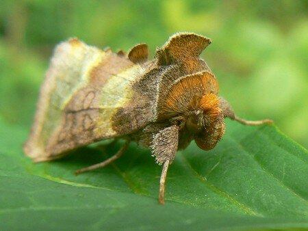 papillonvert2