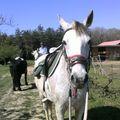 18 AVRIL 2010 FETE DU CHEVAL MONCLAR 004
