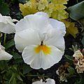 fleurs-urbaines3 (1)