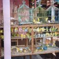 java_jojakarta_marché aux oiseaux_105
