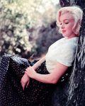 1953_LA_TR_tree_01
