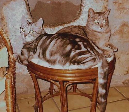 042516_3_Tigri-Frimousse
