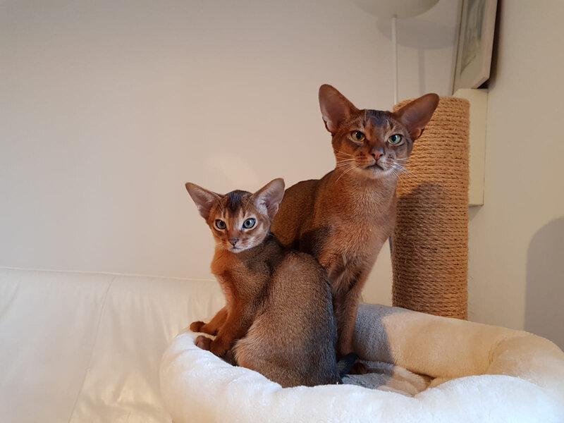 les 2 frères