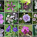 Le calendrier lunaire pour jardiner en septembre 2020