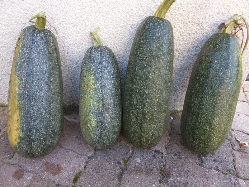 28-courgettes (1)
