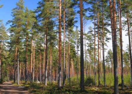 Forest-services-Storaenso