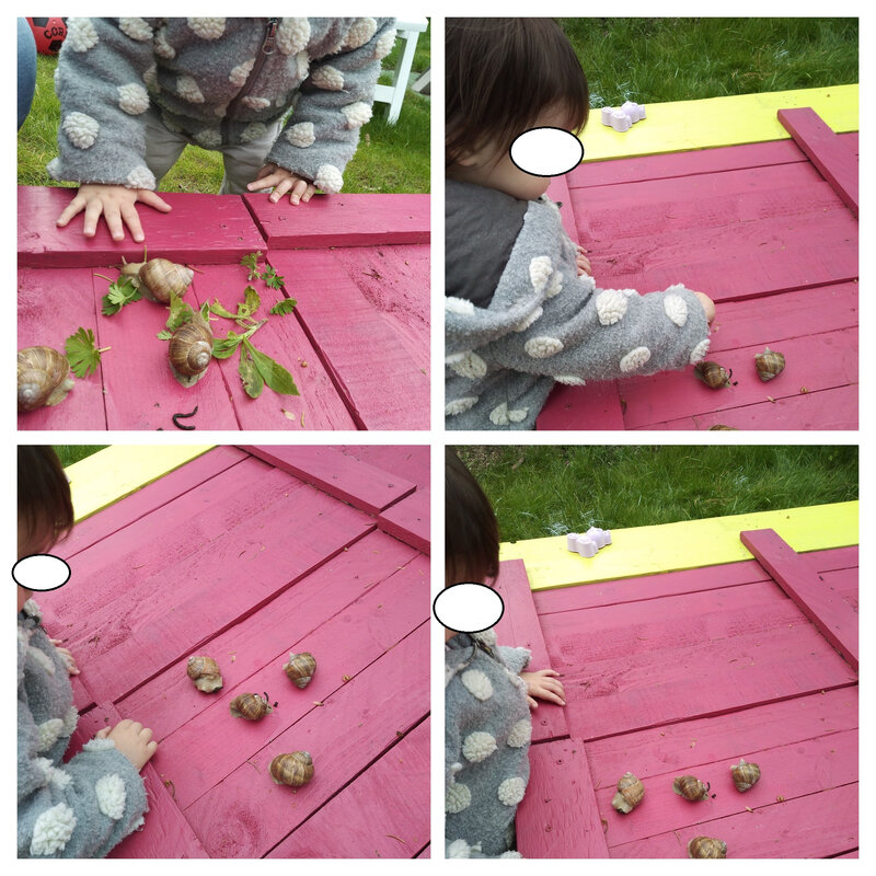 IMG_20190510_165348352-COLLAGE(1)