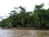 200px_Amazon_river