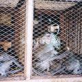 java_jojakarta_marché aux oiseaux_singes_108
