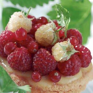 tartelettes-roses-aux-framboises