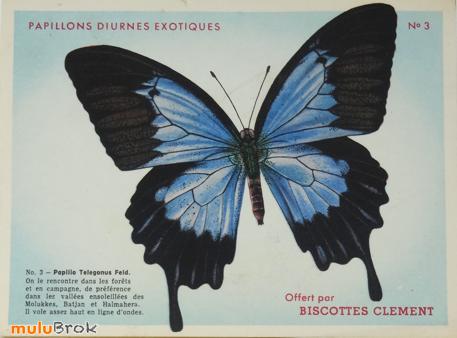 rencontres en ligne papillons en ligne datant de la Chine