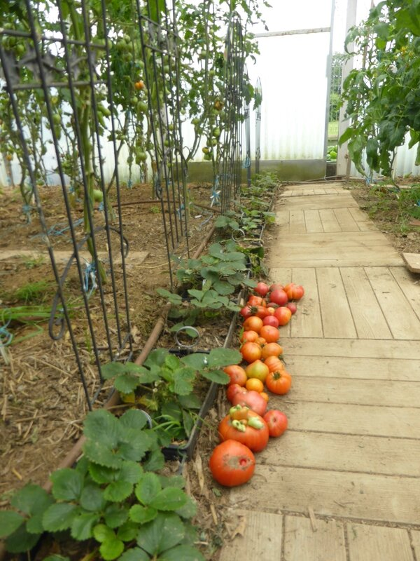 27-tomates (2)