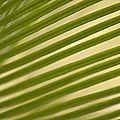 graphisme végétal 4