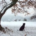 Fin d'automne, froid d'hiver