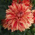 jardin des plantes 061