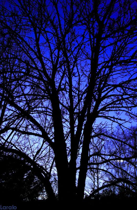 ombre_arbre2
