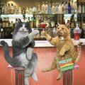 Tchin tchin chats buvant à notre santé