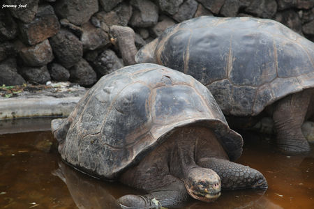tortues_geantes
