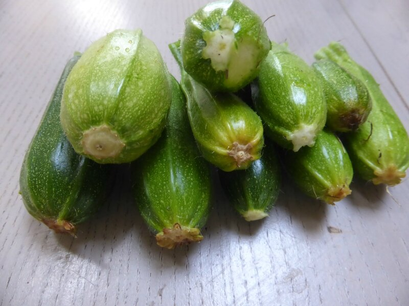 2-courgettes (4)