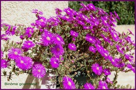 fleurs_du_jardin4