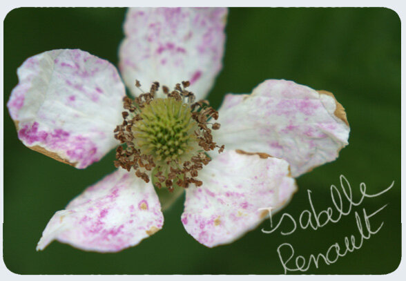 mon_jardin_32