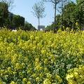 2010 - Les Champs Elysées, capitale nature