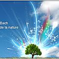 La guérison vibratoire des fleurs de bach