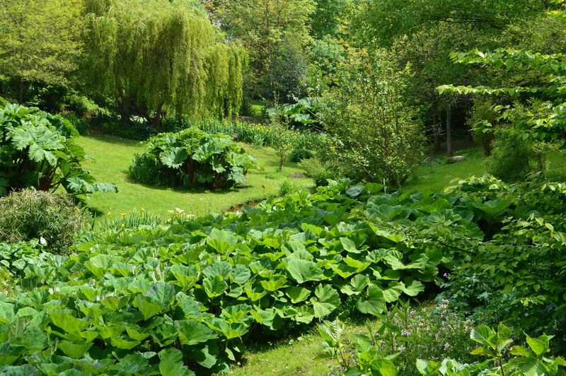 2019-05-18-jardin (39)