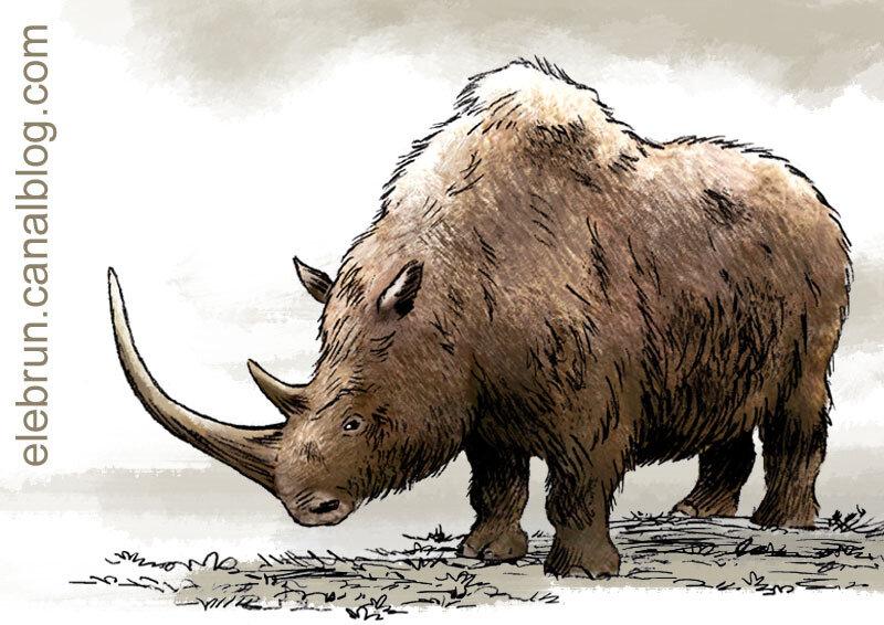 Rhinocéros laineux