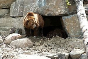 ours qui sort de sa taniere chez gloexen et scrat
