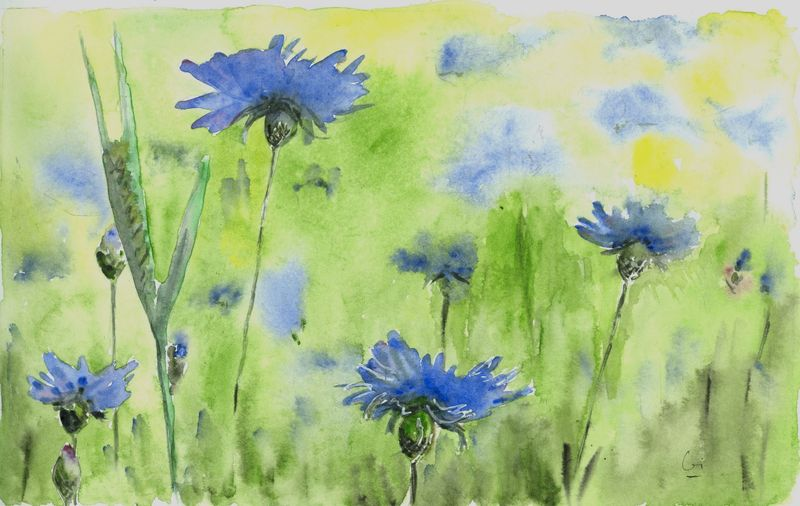 Rêve dans un champ de bleuets