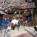 Sakuras 2009
