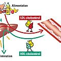 Ldl - hdl comment faire ?