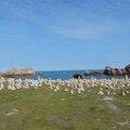 Plage pointe nord de l'Ile de Bréhat
