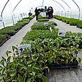 Déception pour les plantations