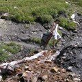 Nicolas tire le Sherpa Trek