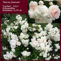 Rose ancienne orléanaise : 'Marie-Jeanne'
