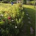 Windows-Live-Writer/jardin_6BD4/DSCF3632_thumb