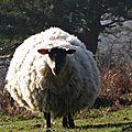 animal-madeleine