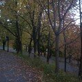 Mont royal 21oct 013
