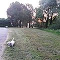 Canicule ou cani-cule