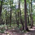 promenons nous dans la forêt plaisiroise